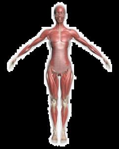 Krop og sundhed