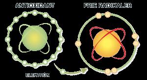 Hvad er en antioxidant og en fri radikal?