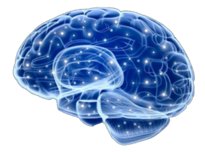 Gurkemeje (Turmeric) har neurobeskyttende egenskaber