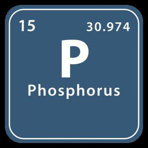 Mineralet fosfor (phosphorus)